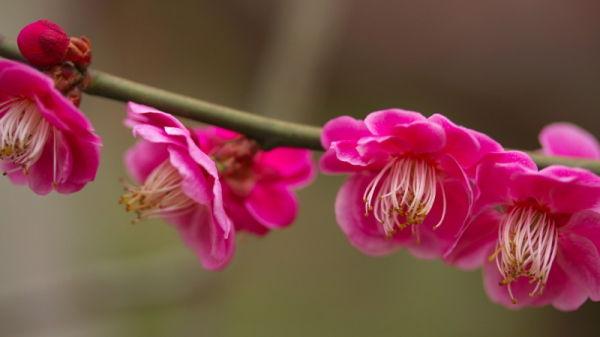 Season of plum blossom #3