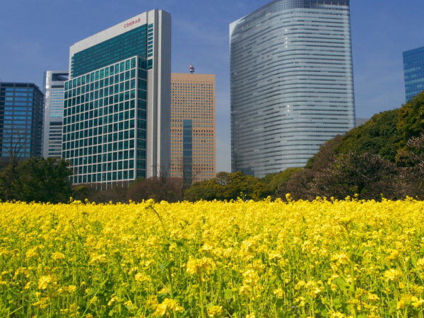 Yellow field in the big city