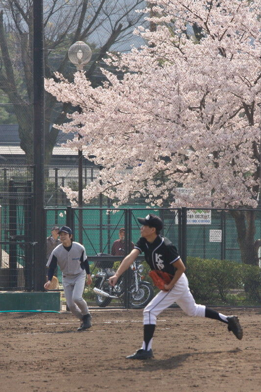 Pitch, hit, and run !  under blossoms