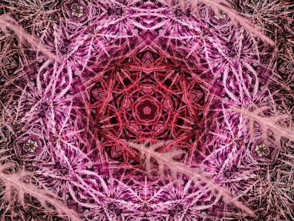 symétrie #5