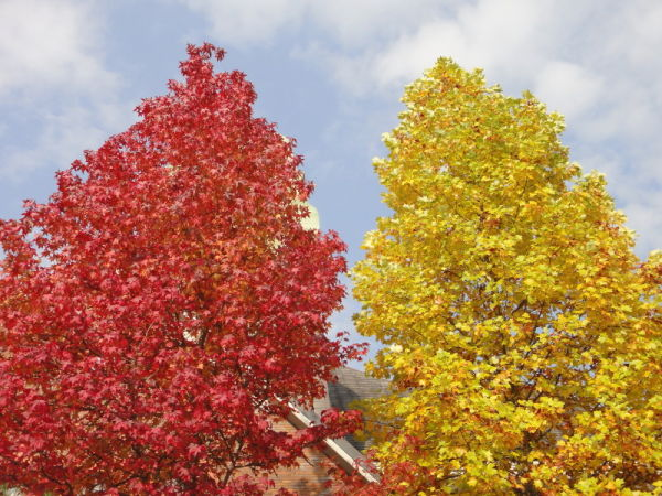competition of red and yellow