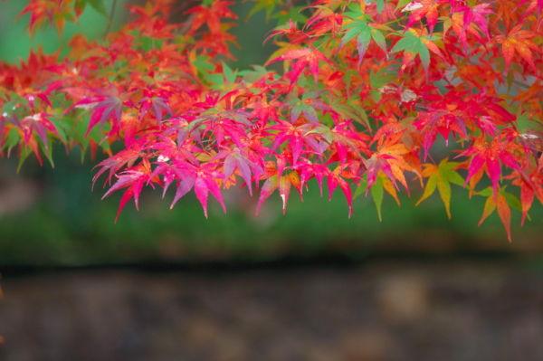 Autumn leaves November 13 #3