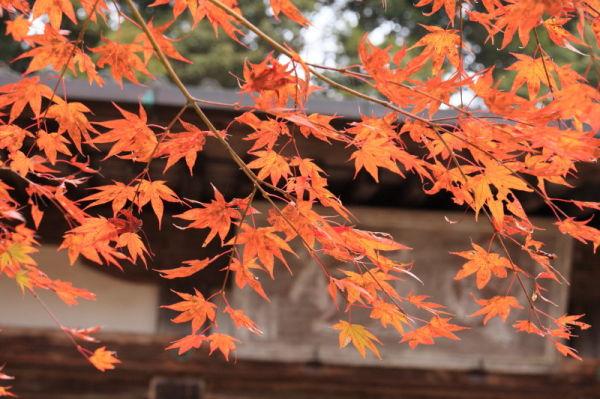 Autumn leaves November 13 #4