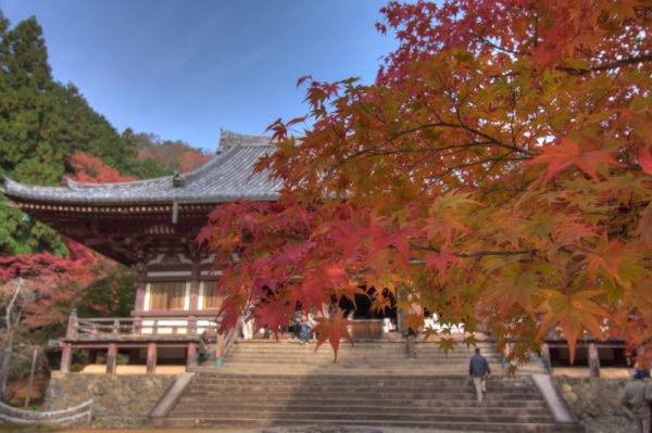 Autumn leaves November 13 #5