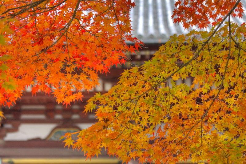 Autumn leaves November 13 #6