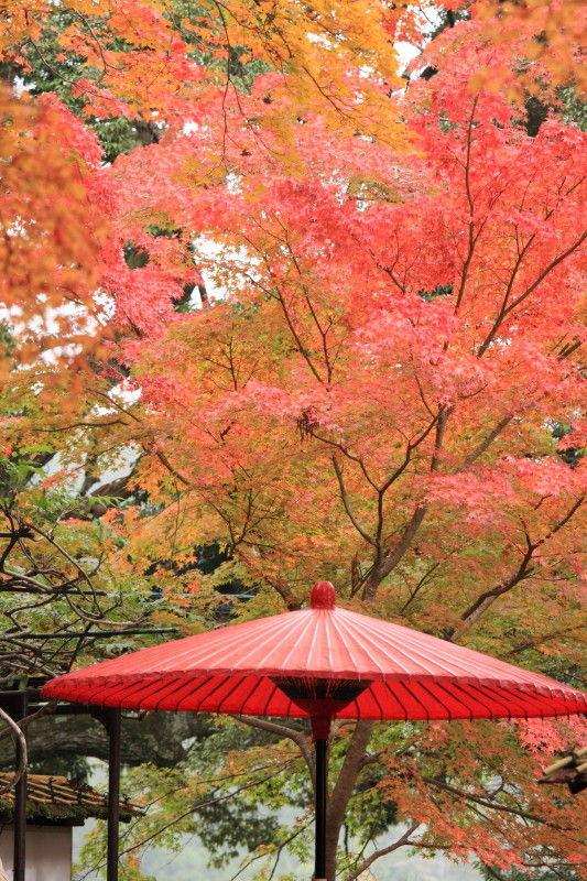Autumn leaves November 13 #8