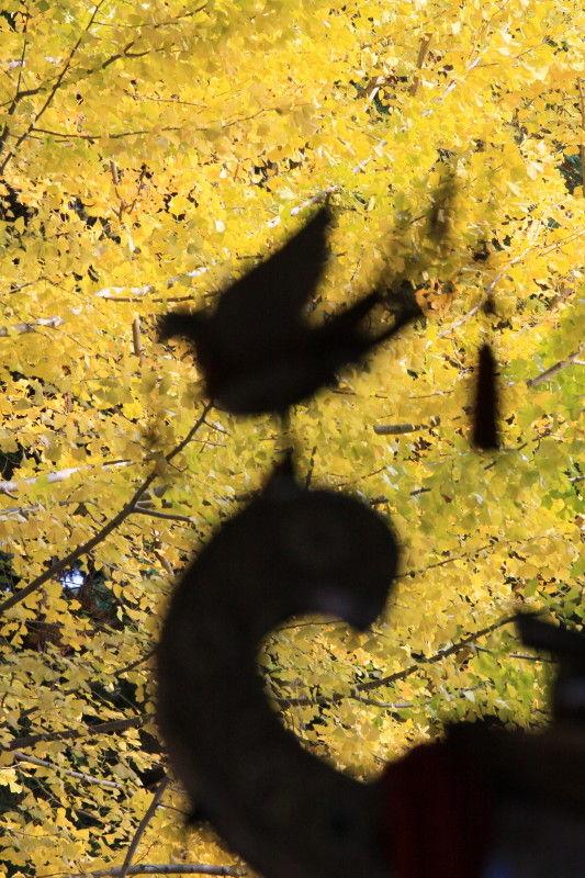 Autumn leaves November 20 #4
