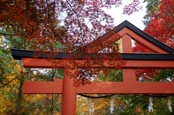 Autumn leaves November 20 #6