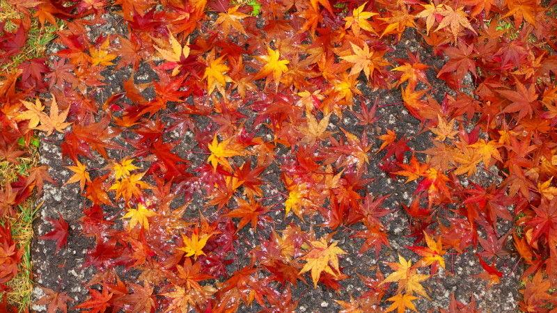 Autumn leaves November 22 #2