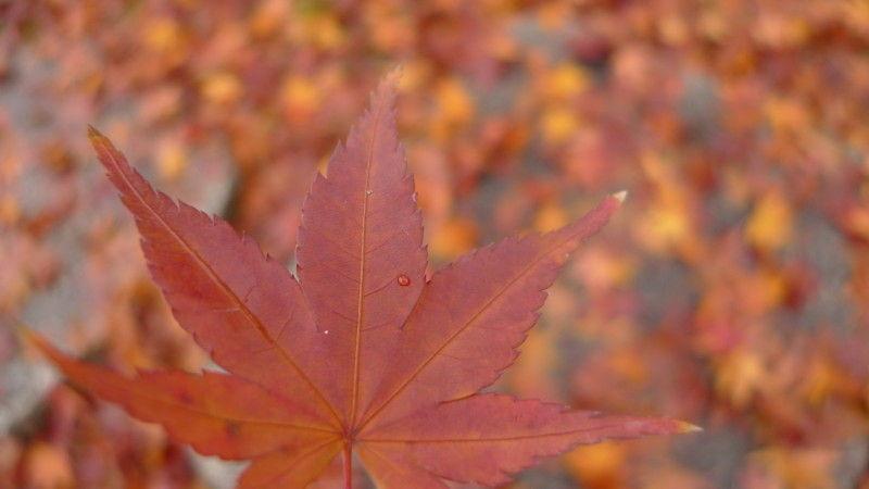 Autumn leaves November 22 #3