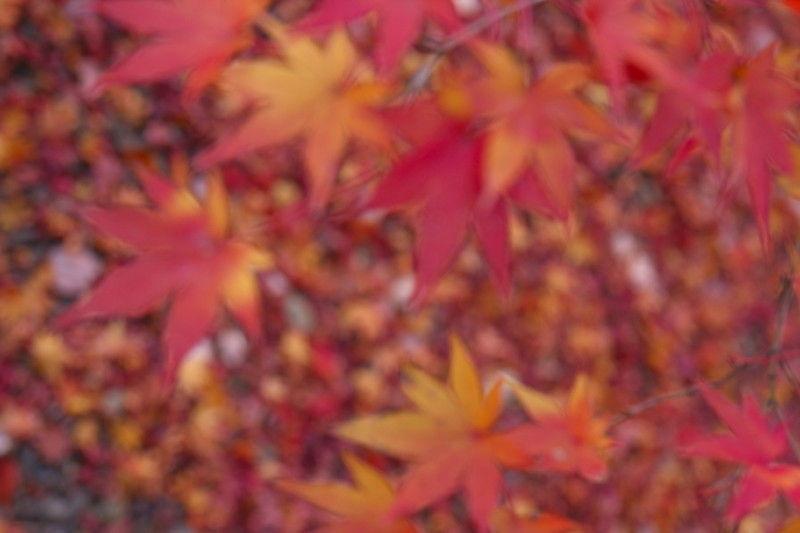 Autumn leaves November 27 #6