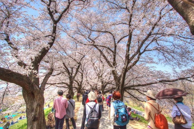 Sakura HDR #4