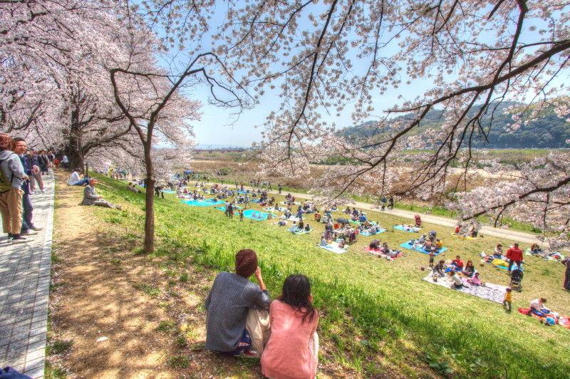 Sakura HDR #5