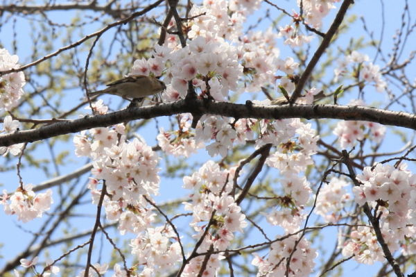 I like sweet blossoms.