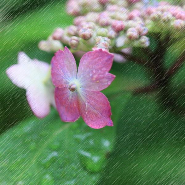 Beginning of the rainy season #2