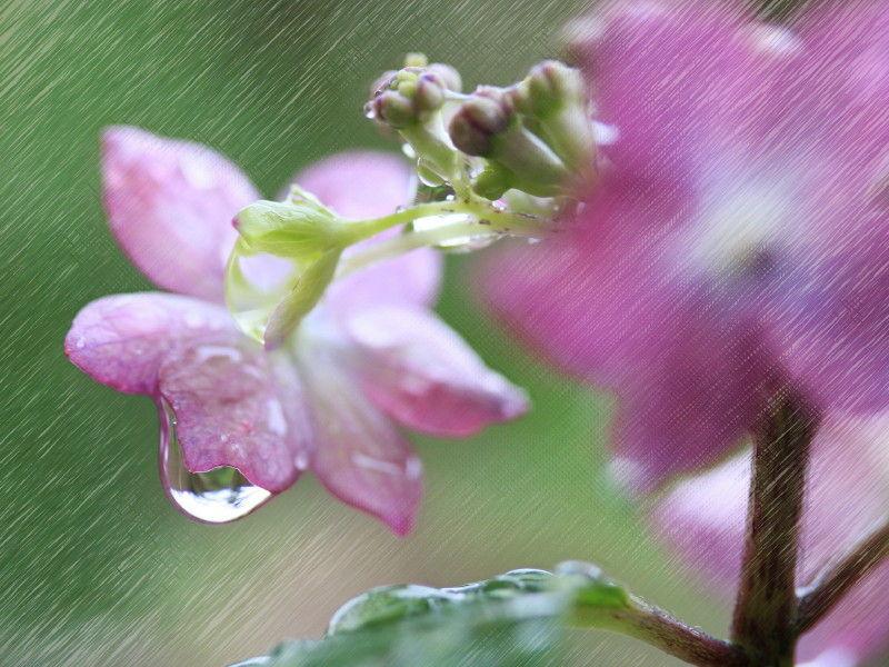 Beginning of the rainy season #4