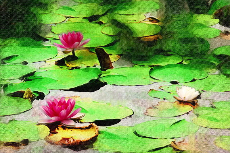 Water lilies #3