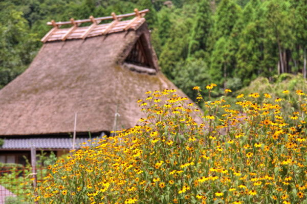 Thatched village #4