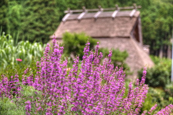 Thatched village #5
