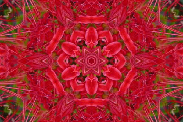 symétrie #8