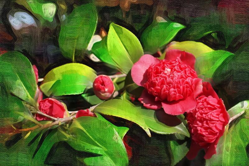 Camellia oilpainting