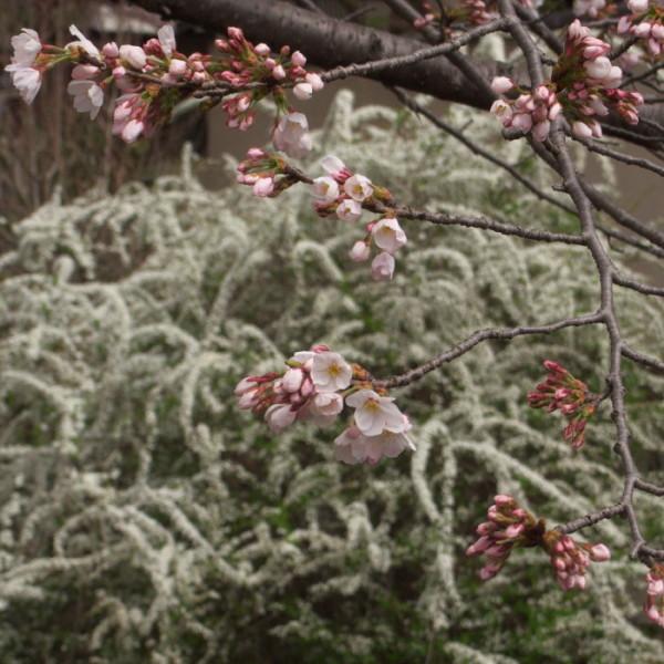Blossoms have come 30%