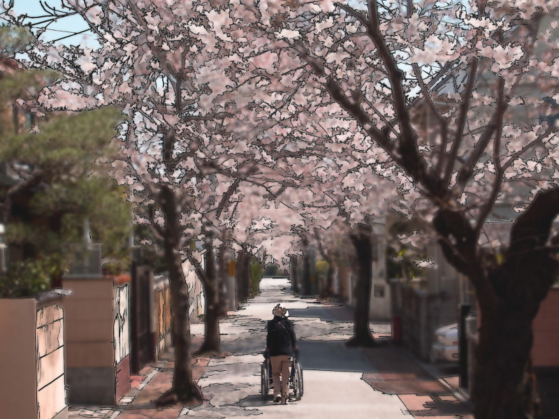 Let the wheelchair take a walk under the blossoms.