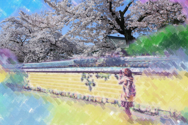 Let the girl take a picture of the blossoms.