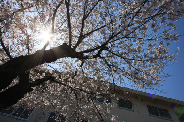 Let the sun shine on the blossoms.