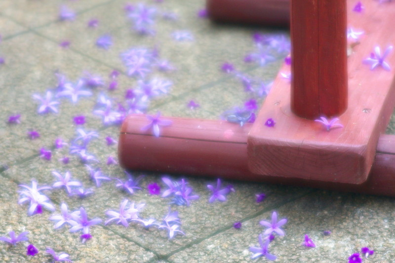 Petals are shining even after fell on the ground.