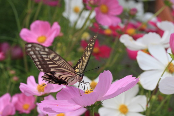sweet nectar #2