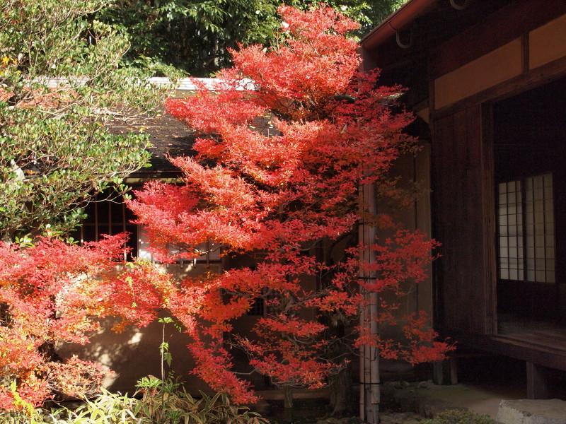 Autumn in Kyoto #20