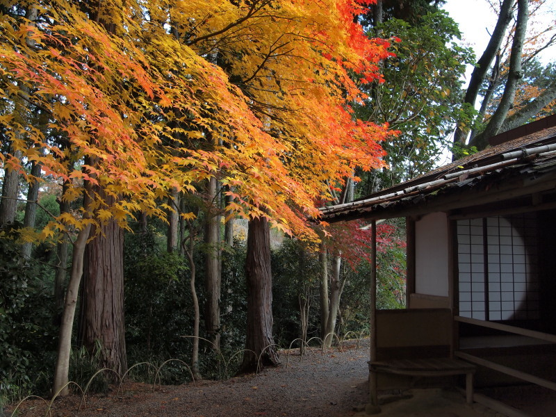 Autumn in Kyoto #26
