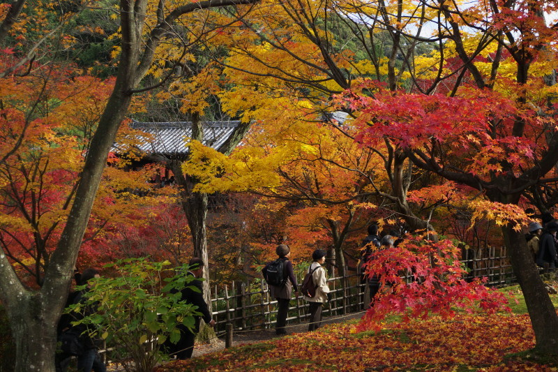 Autumn in Kyoto #28