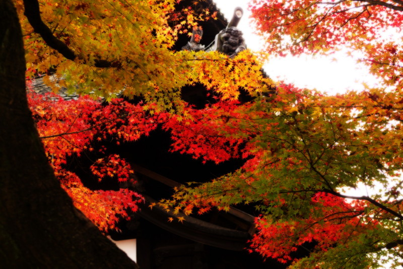 Autumn in Kyoto #29