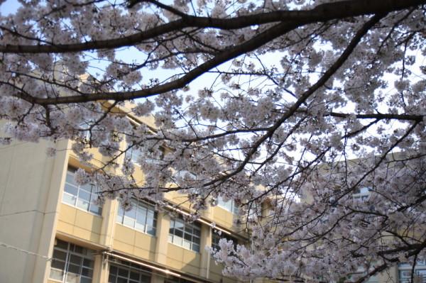 Spring time around me #2