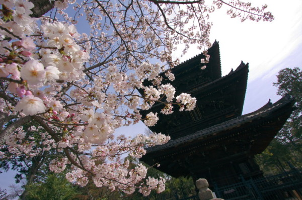 Blossoms under warm light