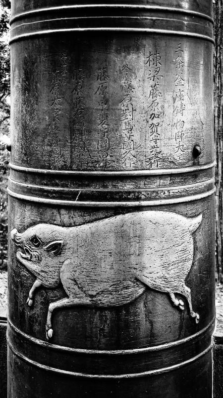 wild boar #1