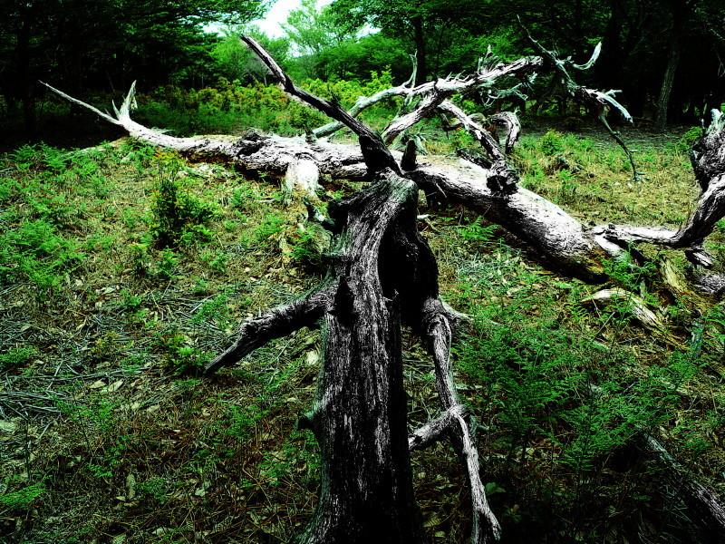 nature art ?