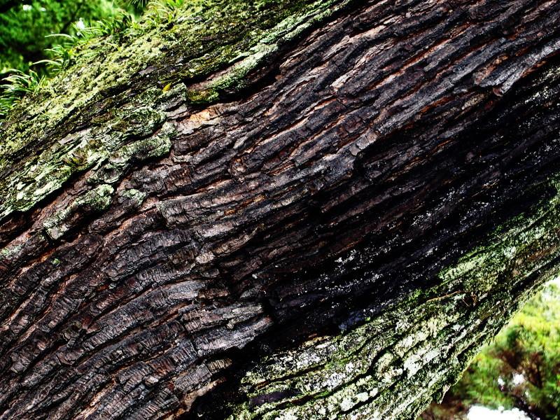 wooden textures #1