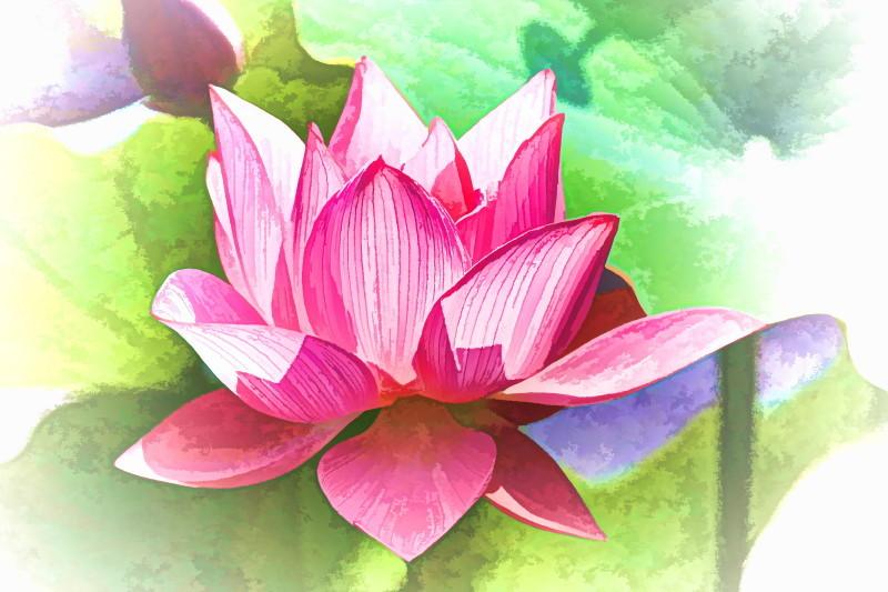 Lotus magic #6