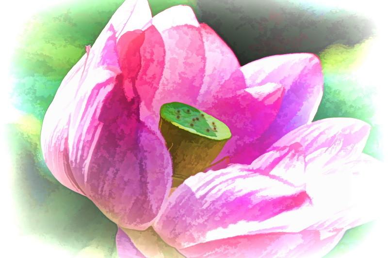 Lotus magic #7