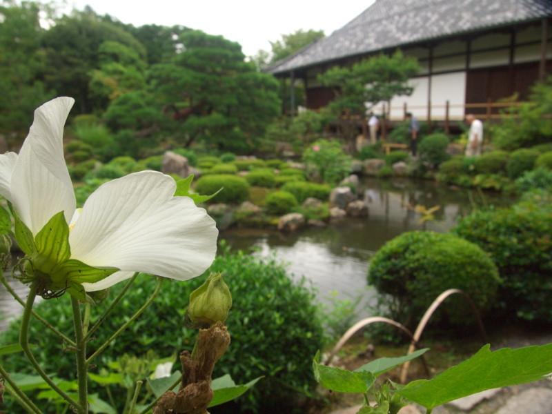 temple garden #8