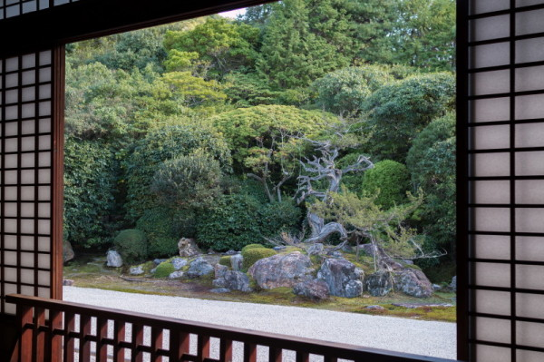 garden view #2