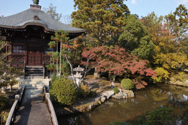 autumn garden #3