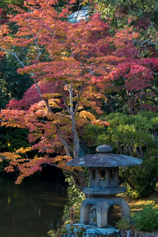 autumn garden #4