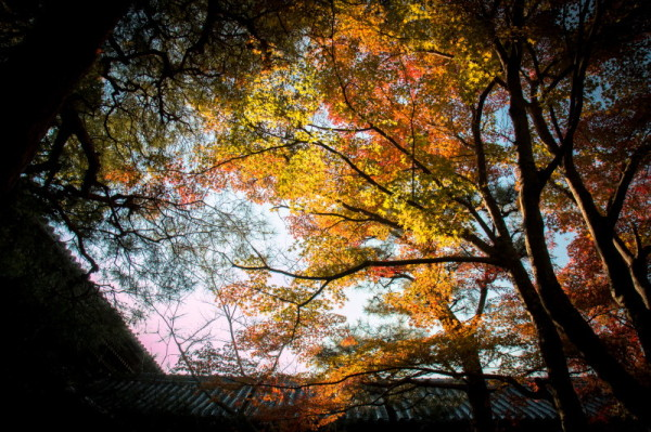 autumn afternoon #1