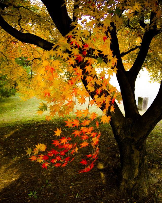 autumn afternoon #2