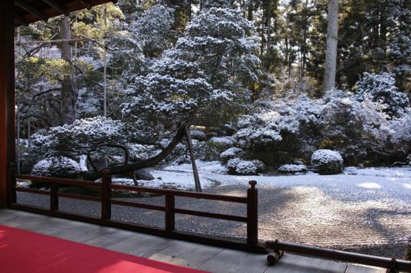 winter garden #1