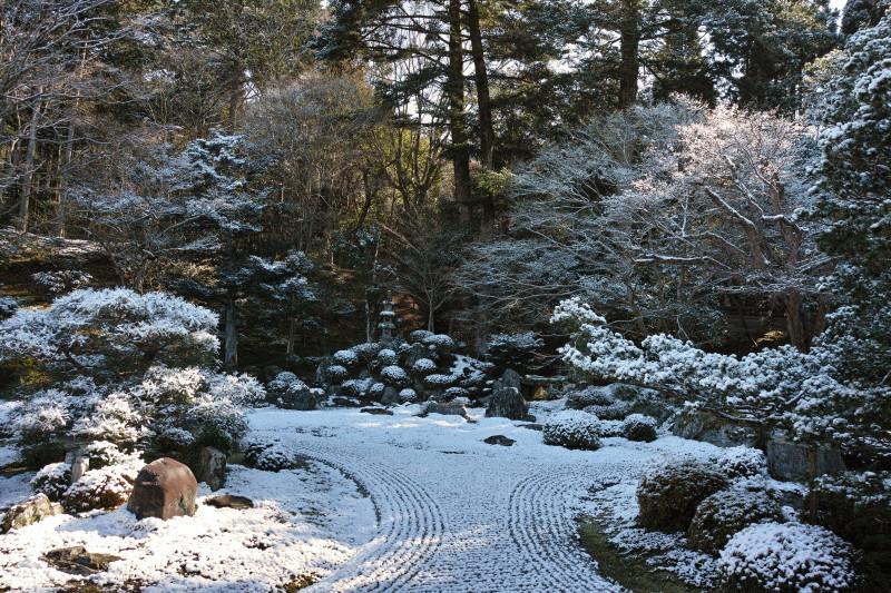 winter garden #2